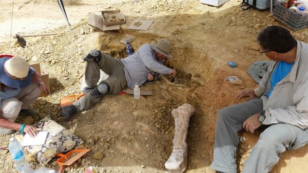 עצמות פיל בחפירות כמוס